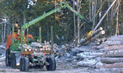 Загрузка леса