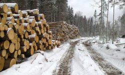 Складированый лес