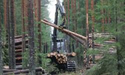 1Сруб дома и заготовка лесного материала.