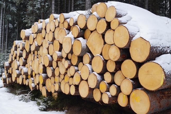 Как отличить зимний лес от летнего?