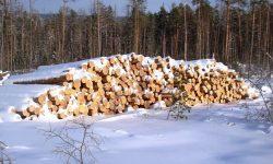 Заготовленный лес