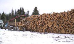 Складирование леса 1